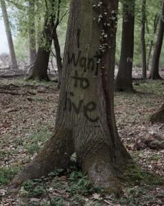 Forêt de Hambach_Graffiti_Avril2013